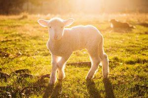 SHEEP SHEAR MISSION LIFE DAY @ La Purisima Mission State Historic Park